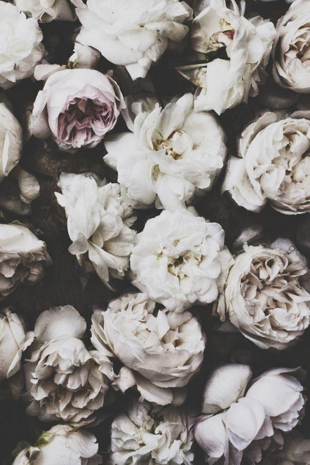 flower mellow